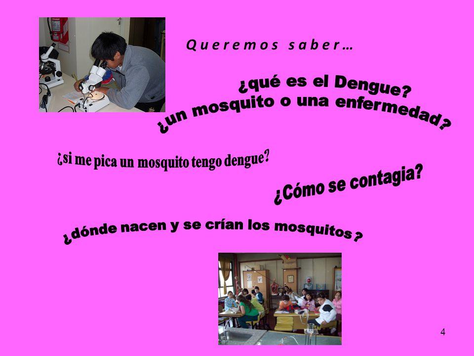 ¿si me pica un mosquito tengo dengue