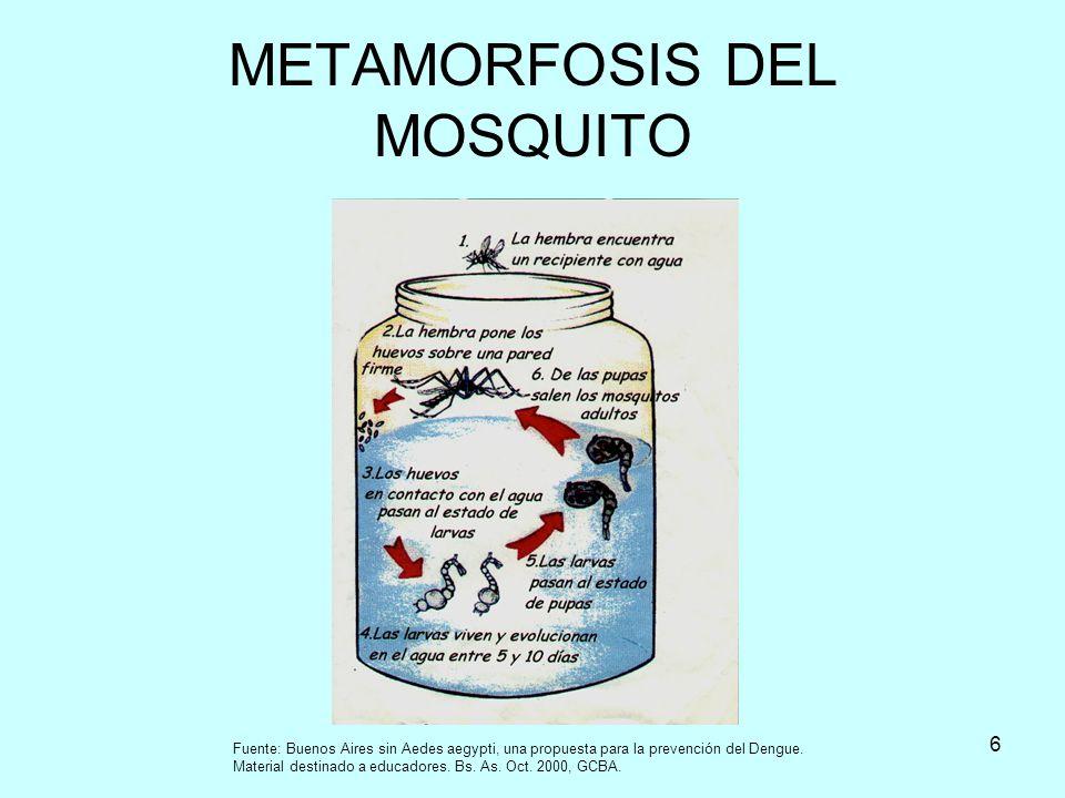 METAMORFOSIS DEL MOSQUITO