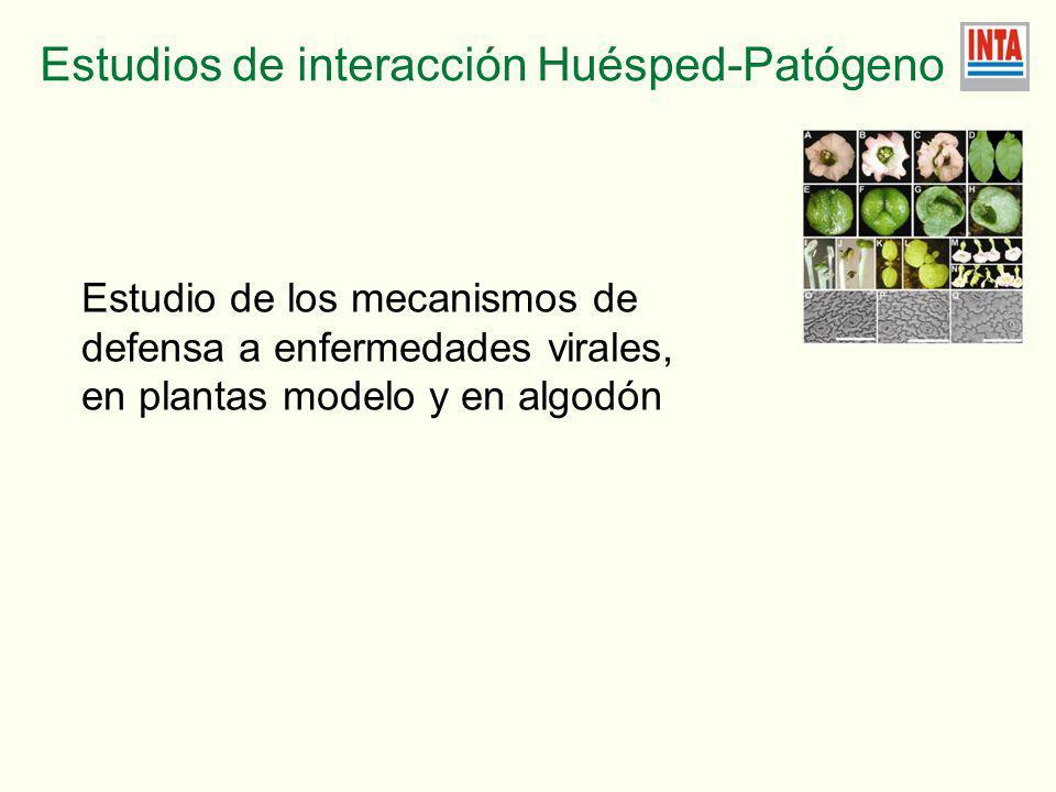 Estudios de interacción Huésped-Patógeno