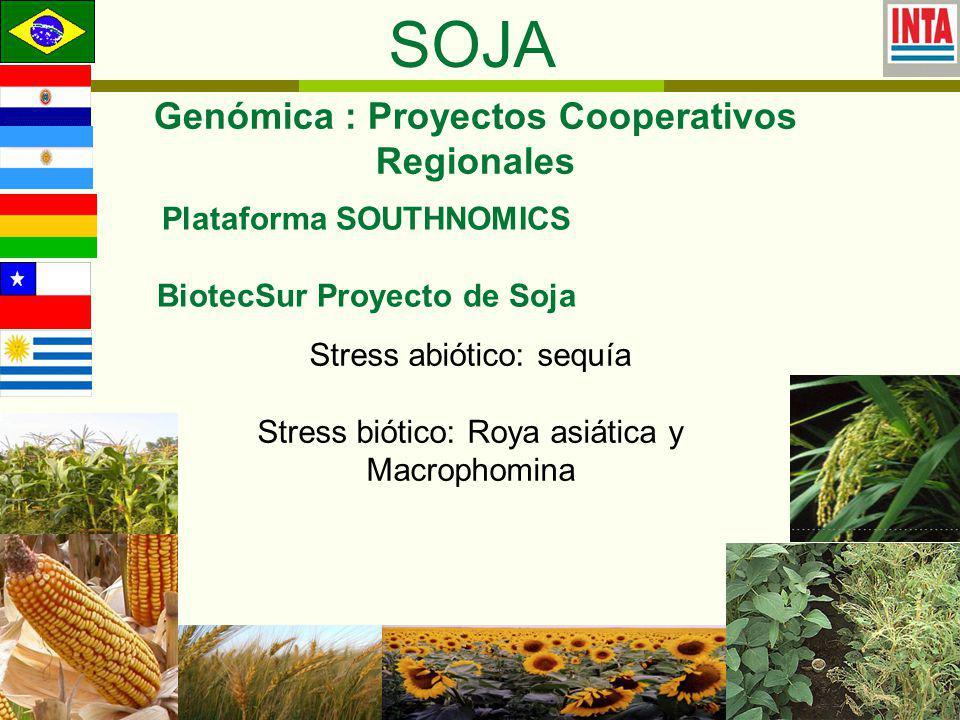 SOJA Genómica : Proyectos Cooperativos Regionales