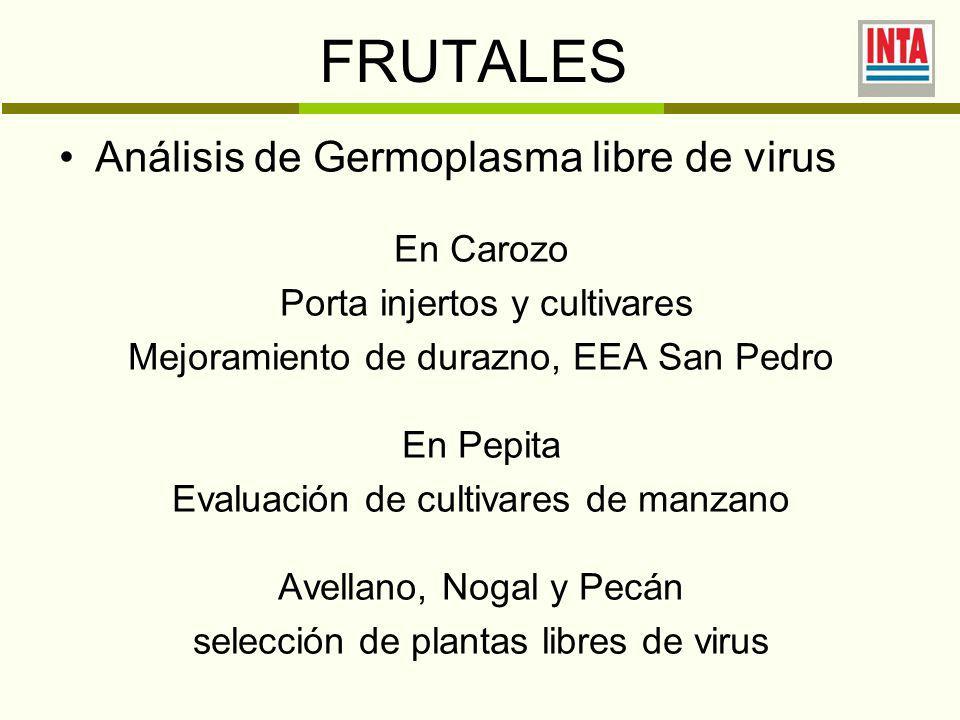 FRUTALES Análisis de Germoplasma libre de virus En Carozo