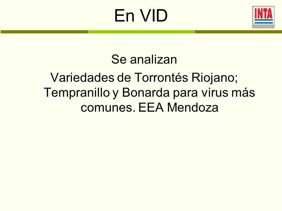 En VID Se analizan Variedades de Torrontés Riojano; Tempranillo y Bonarda para virus más comunes.