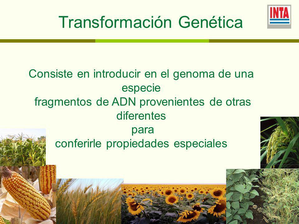 Transformación Genética