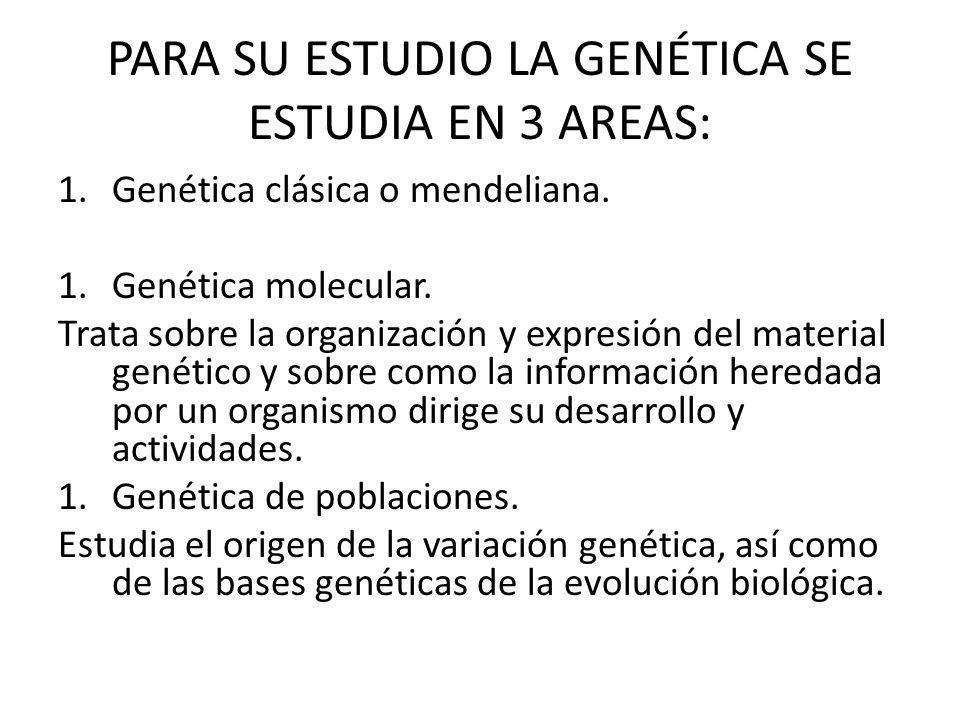 PARA SU ESTUDIO LA GENÉTICA SE ESTUDIA EN 3 AREAS: