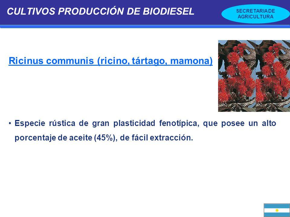 CULTIVOS PRODUCCIÓN DE BIODIESEL