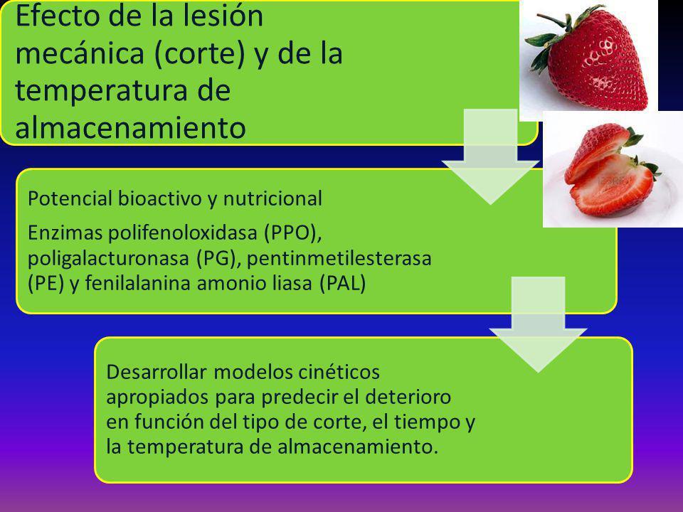 Efecto de la lesión mecánica (corte) y de la temperatura de almacenamiento