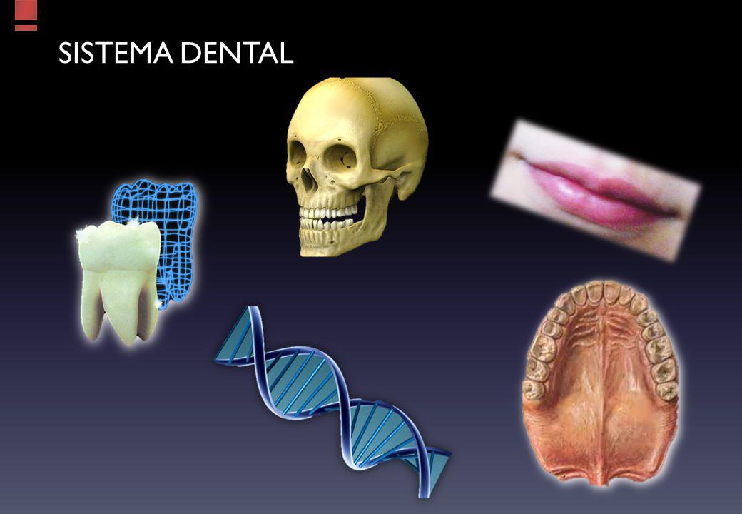 Sistema dental