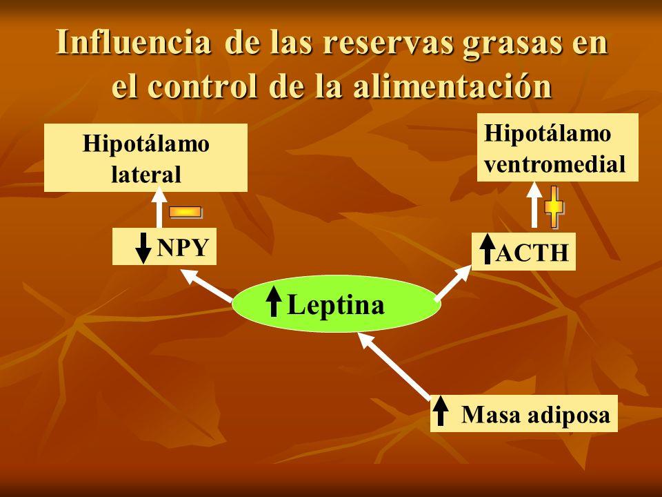 Influencia de las reservas grasas en el control de la alimentación
