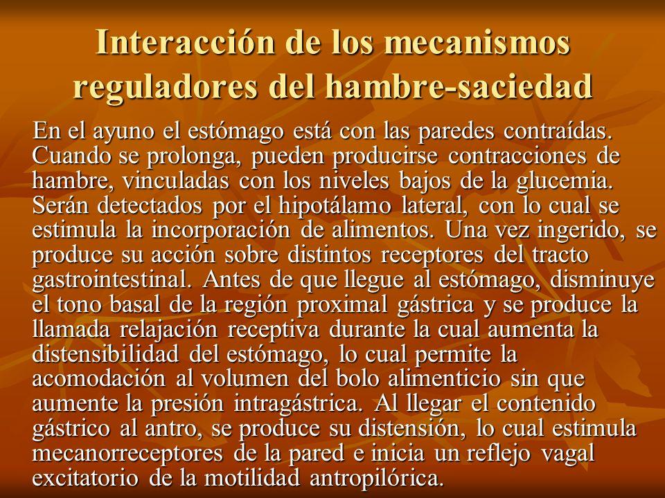 Interacción de los mecanismos reguladores del hambre-saciedad