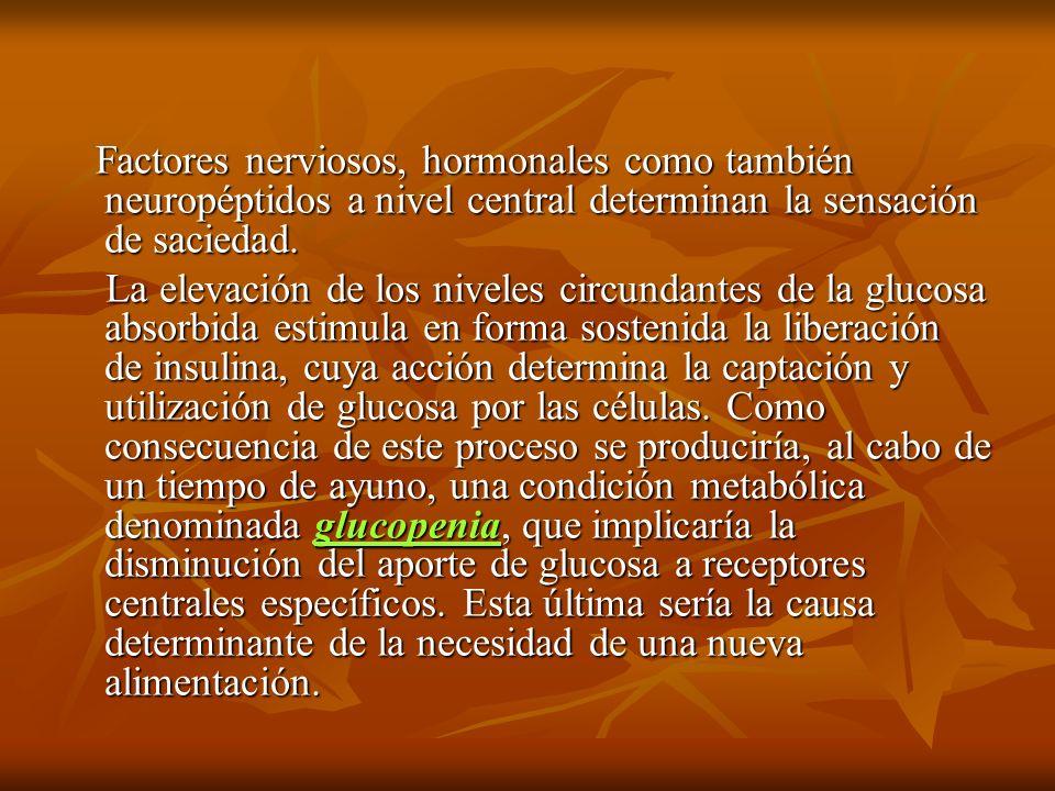 Factores nerviosos, hormonales como también neuropéptidos a nivel central determinan la sensación de saciedad.