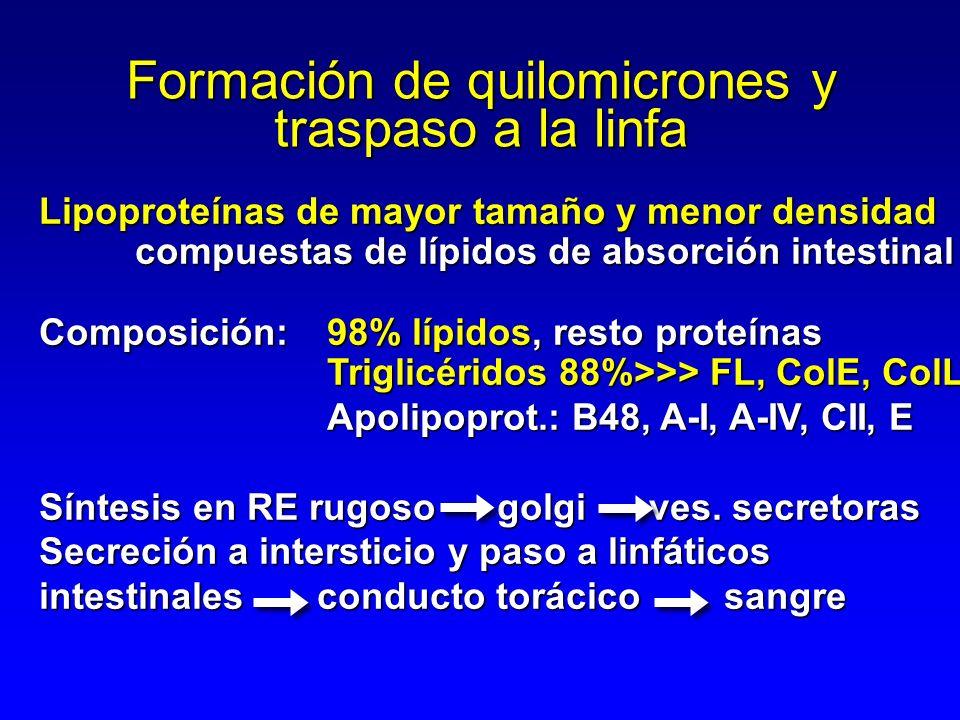 Formación de quilomicrones y