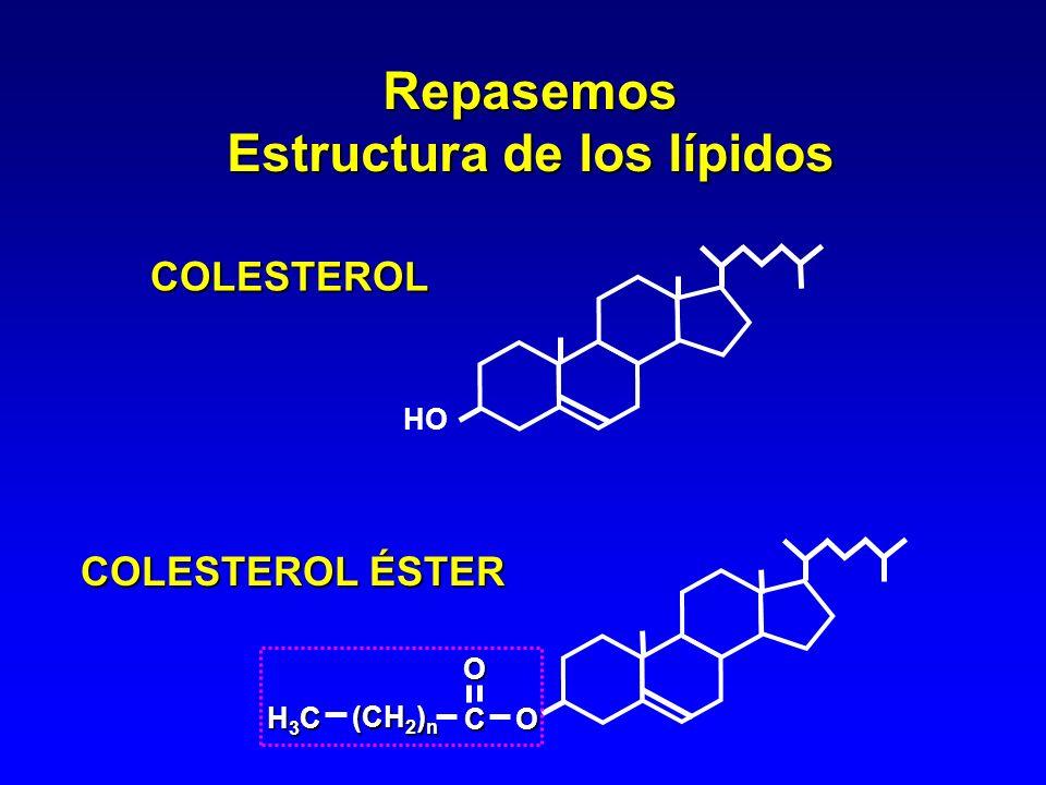 Estructura de los lípidos