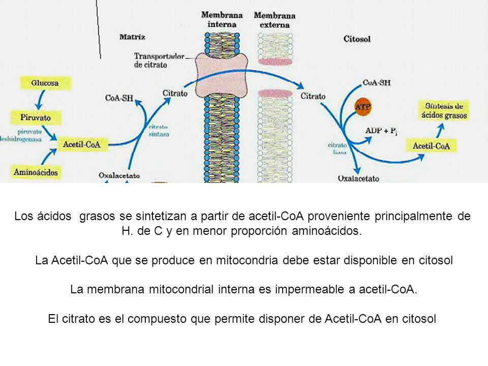 H. de C y en menor proporción aminoácidos.