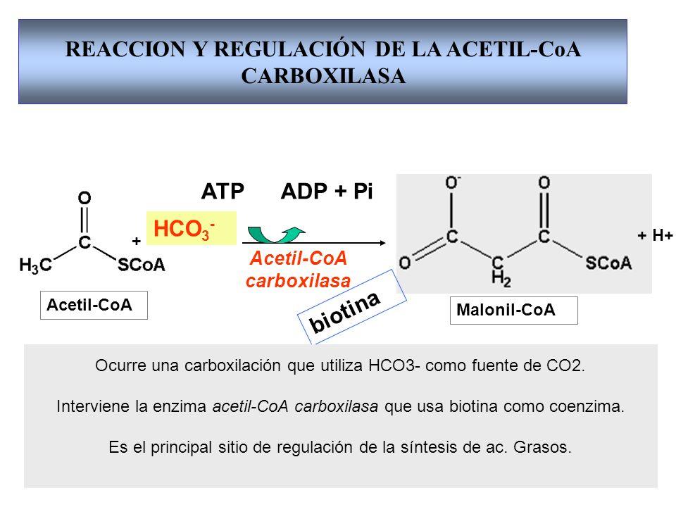 REACCION Y REGULACIÓN DE LA ACETIL-CoA CARBOXILASA