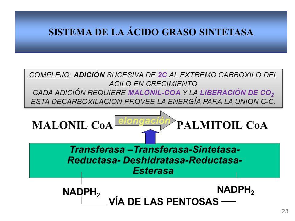 MALONIL CoA PALMITOIL CoA
