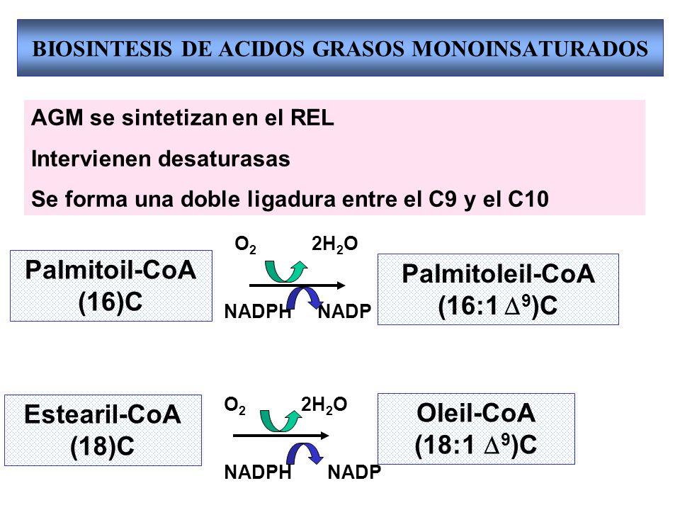 BIOSINTESIS DE ACIDOS GRASOS MONOINSATURADOS