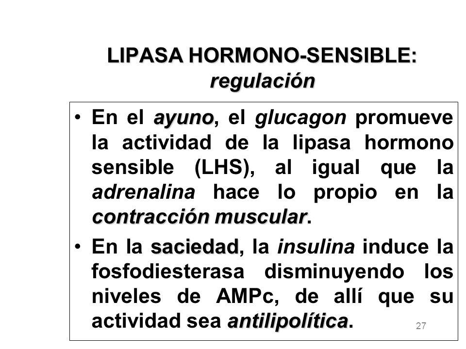 LIPASA HORMONO-SENSIBLE: regulación