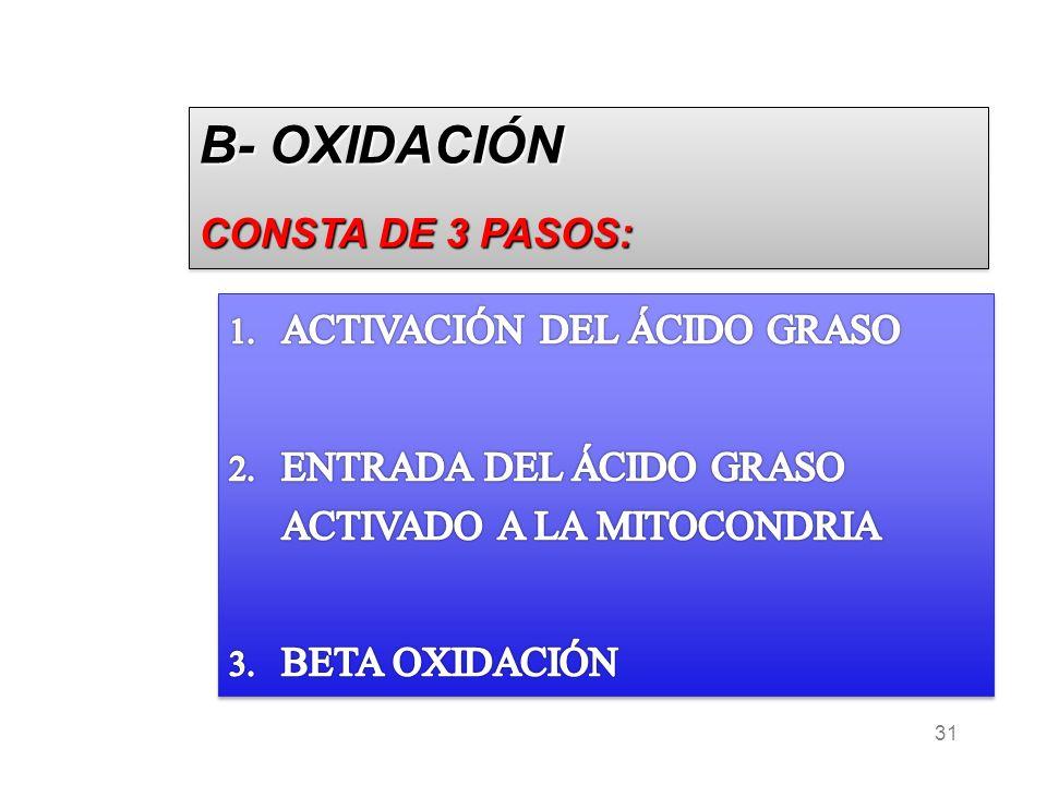 B- OXIDACIÓN CONSTA DE 3 PASOS: ACTIVACIÓN DEL ÁCIDO GRASO