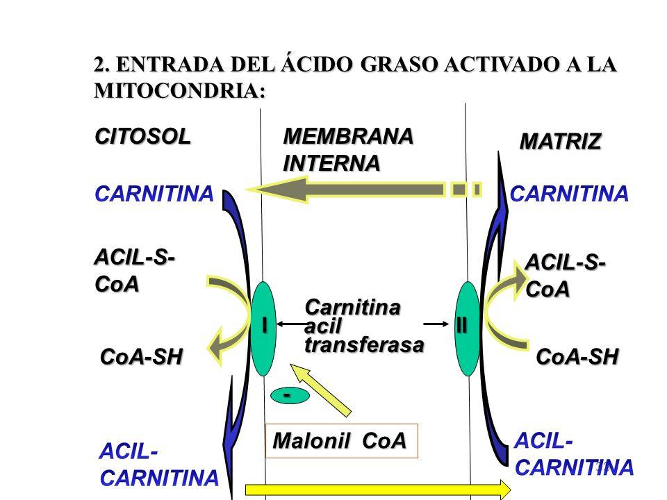 2. ENTRADA DEL ÁCIDO GRASO ACTIVADO A LA MITOCONDRIA: