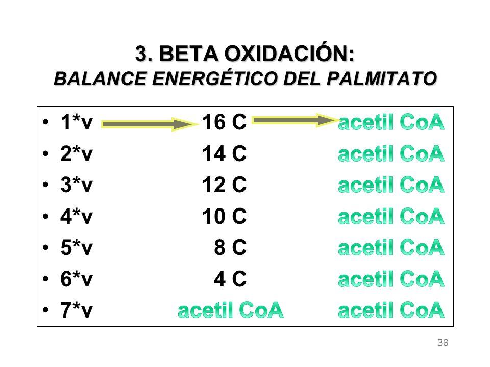 3. BETA OXIDACIÓN: BALANCE ENERGÉTICO DEL PALMITATO