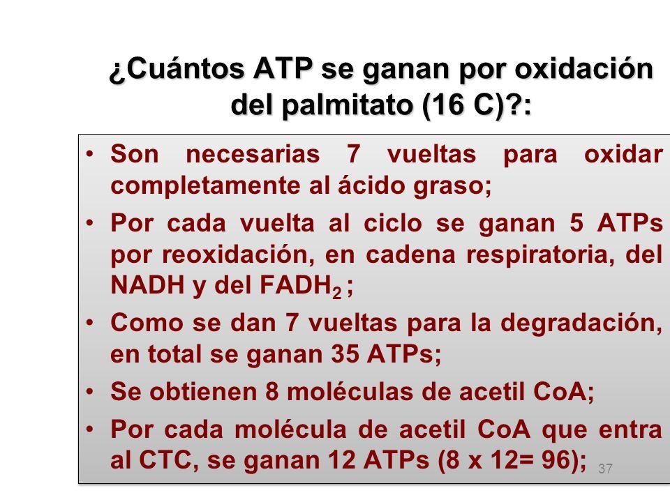 ¿Cuántos ATP se ganan por oxidación del palmitato (16 C) :