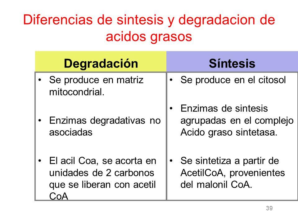 Diferencias de sintesis y degradacion de acidos grasos