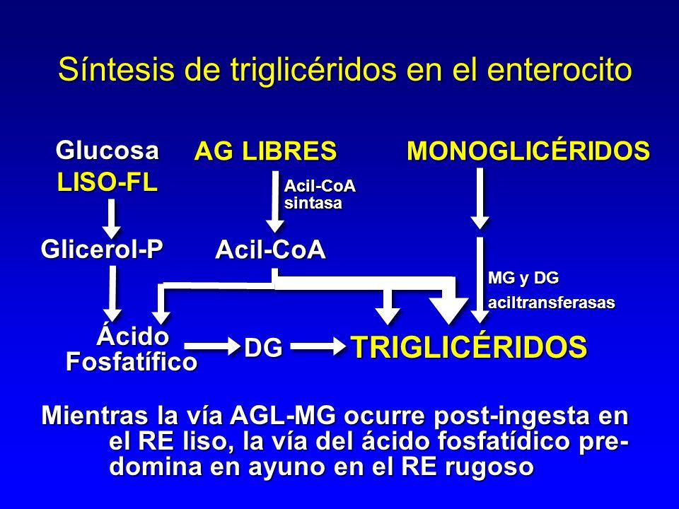 AG LIBRES MONOGLICÉRIDOS