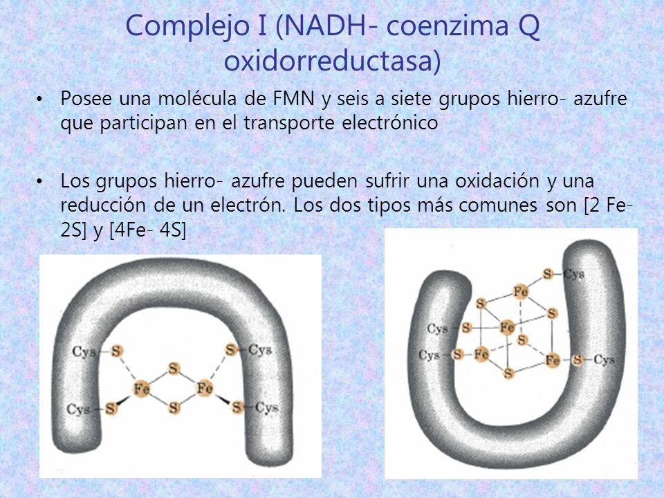 Complejo I (NADH- coenzima Q oxidorreductasa)