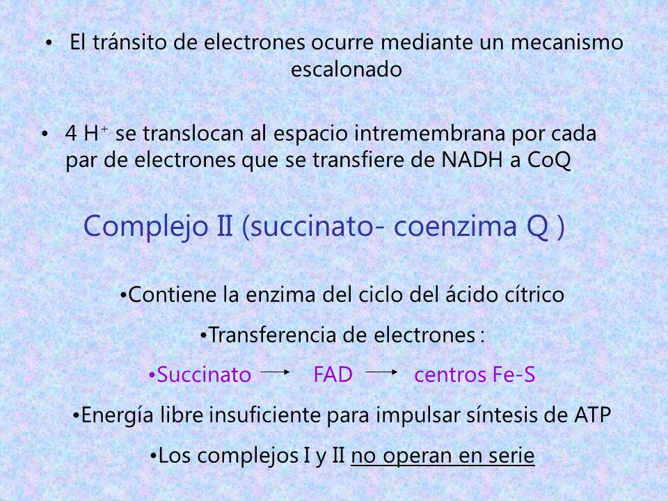 Complejo II (succinato- coenzima Q )