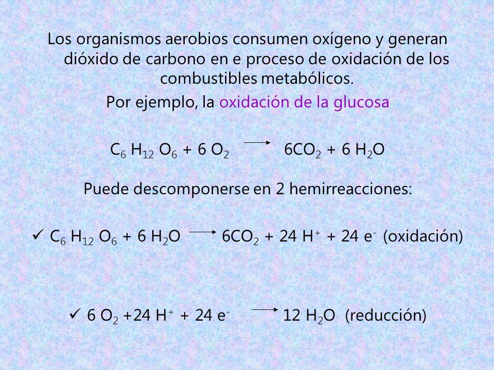 Por ejemplo, la oxidación de la glucosa C6 H12 O6 + 6 O2 6CO2 + 6 H2O