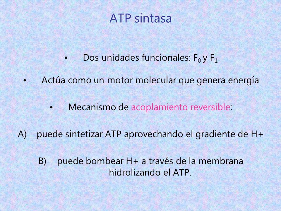 ATP sintasa Dos unidades funcionales: F0 y F1