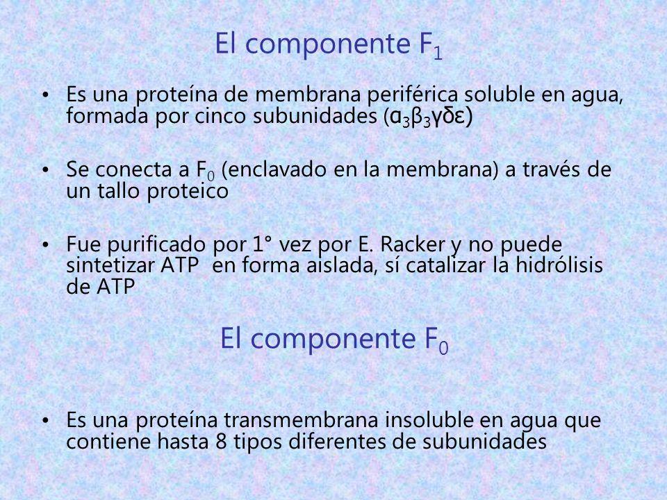 El componente F1 El componente F0