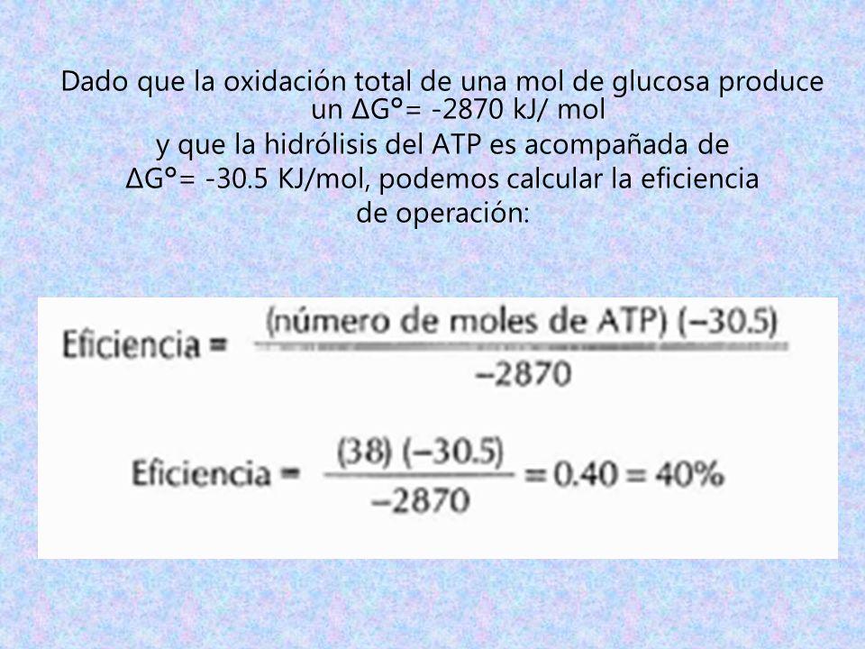y que la hidrólisis del ATP es acompañada de