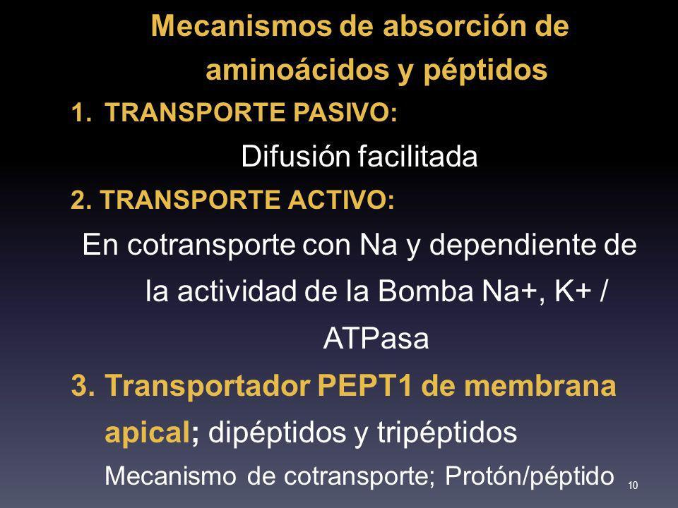 Mecanismos de absorción de aminoácidos y péptidos
