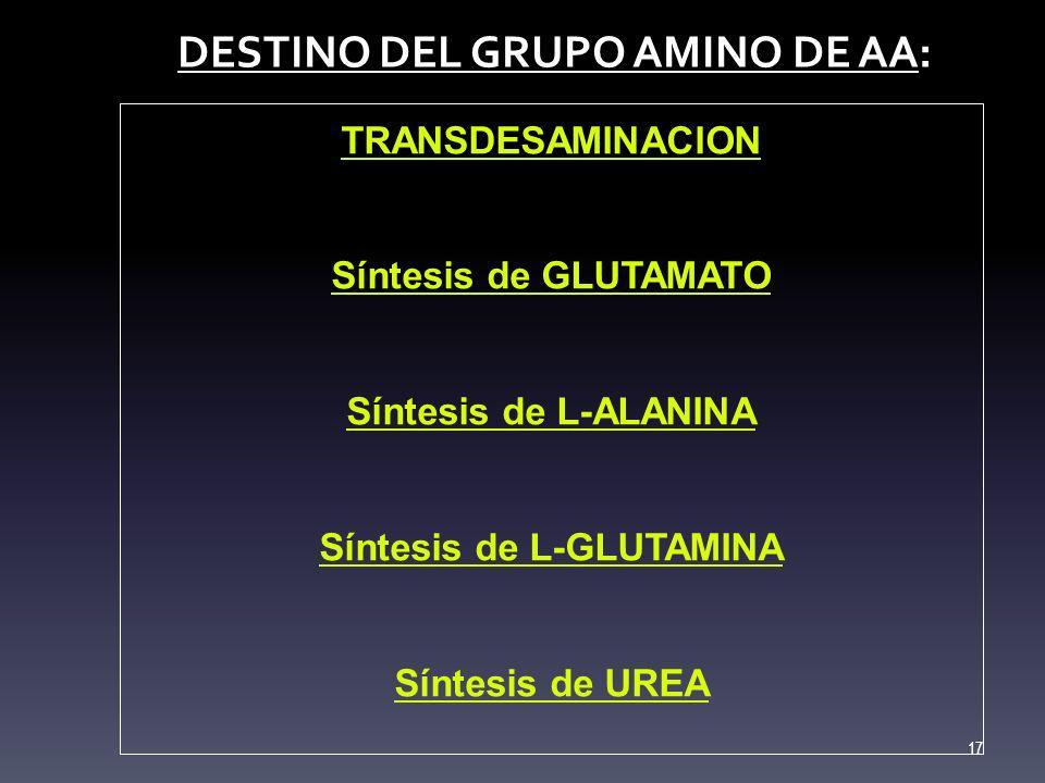 DESTINO DEL GRUPO AMINO DE AA: