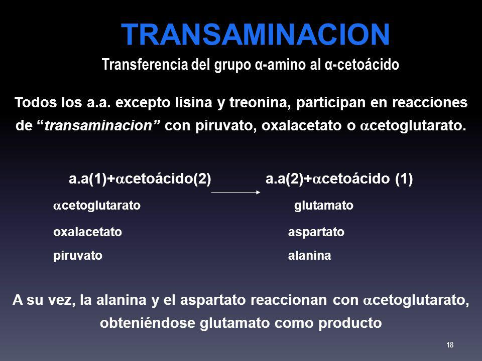 TRANSAMINACION Transferencia del grupo α-amino al α-cetoácido