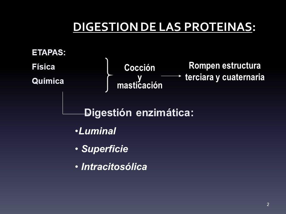 DIGESTION DE LAS PROTEINAS: