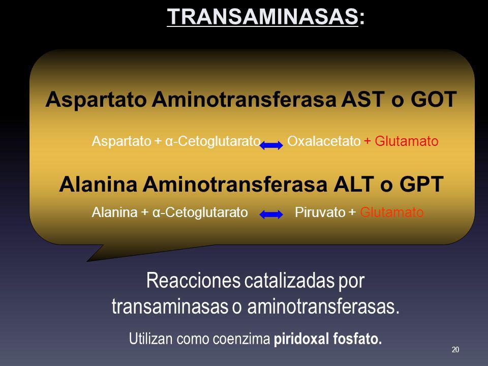 Aspartato Aminotransferasa AST o GOT