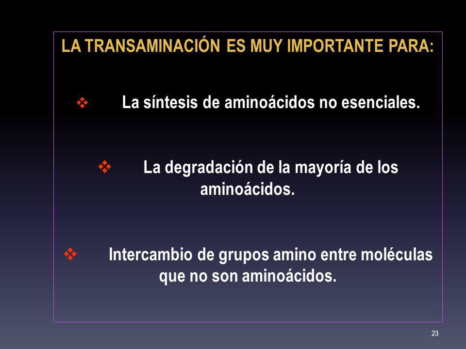 LA TRANSAMINACIÓN ES MUY IMPORTANTE PARA: