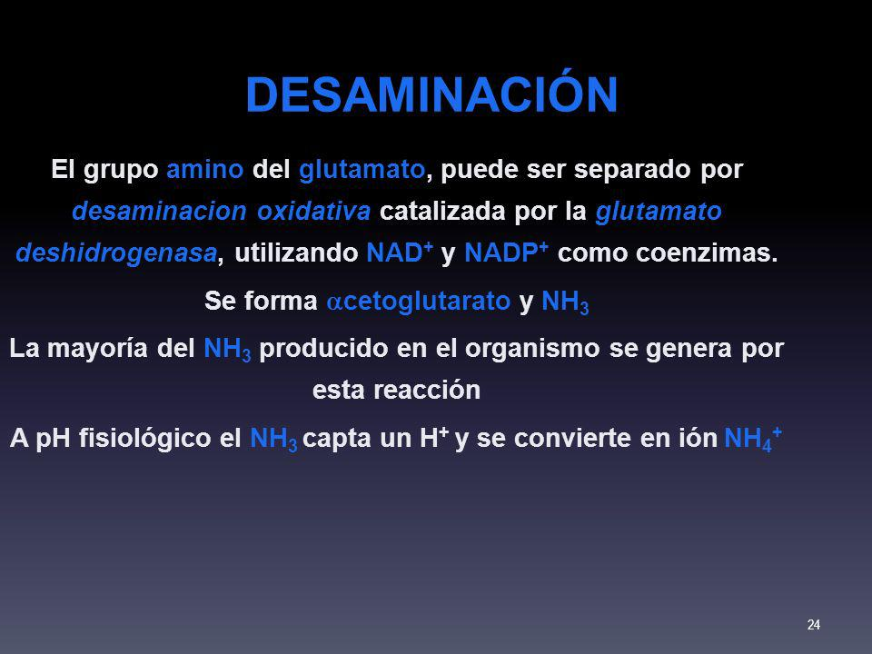 DESAMINACIÓN