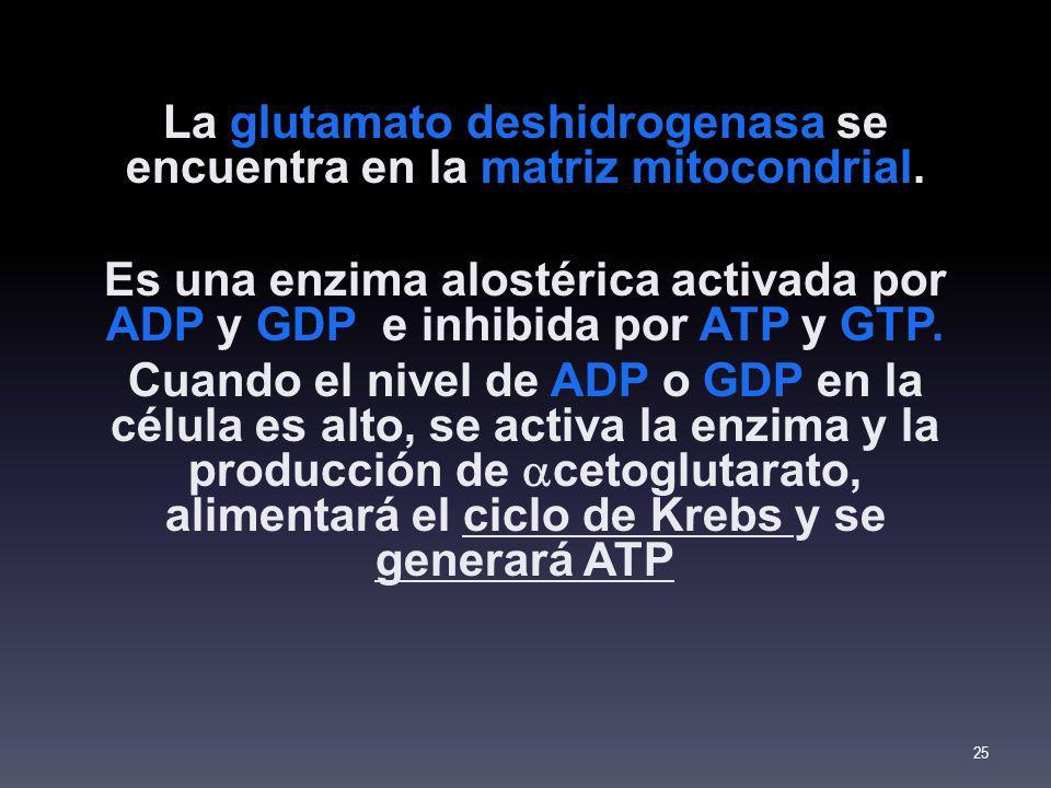 La glutamato deshidrogenasa se encuentra en la matriz mitocondrial.