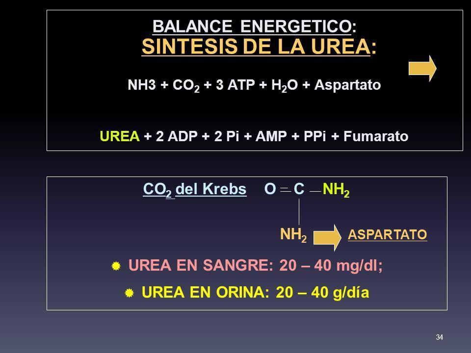 SINTESIS DE LA UREA: BALANCE ENERGETICO: CO2 del Krebs O C NH2
