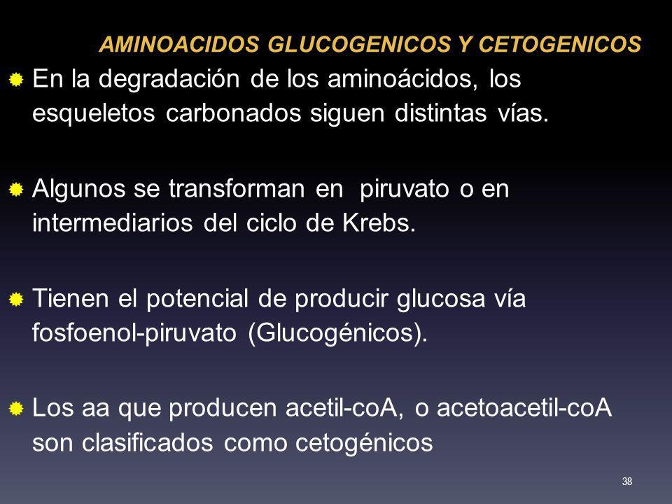 AMINOACIDOS GLUCOGENICOS Y CETOGENICOS