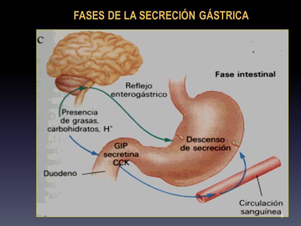 FASES DE LA SECRECIÓN GÁSTRICA
