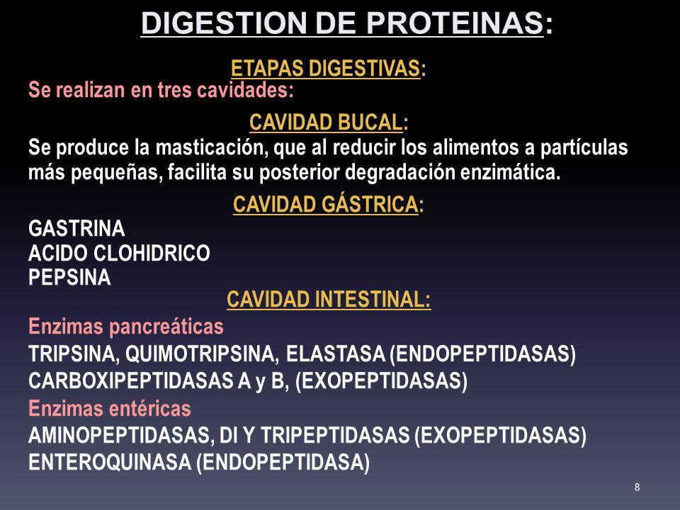 DIGESTION DE PROTEINAS: