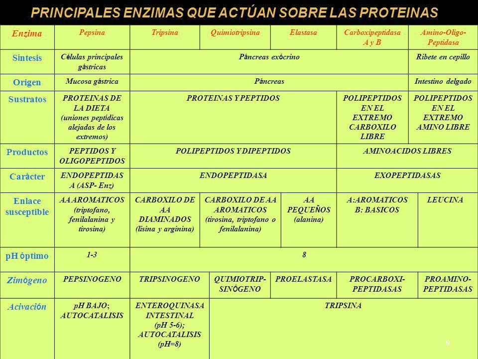 PRINCIPALES ENZIMAS QUE ACTÚAN SOBRE LAS PROTEINAS