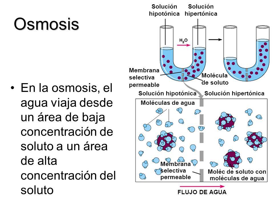 Moléc de soluto con moléculas de agua