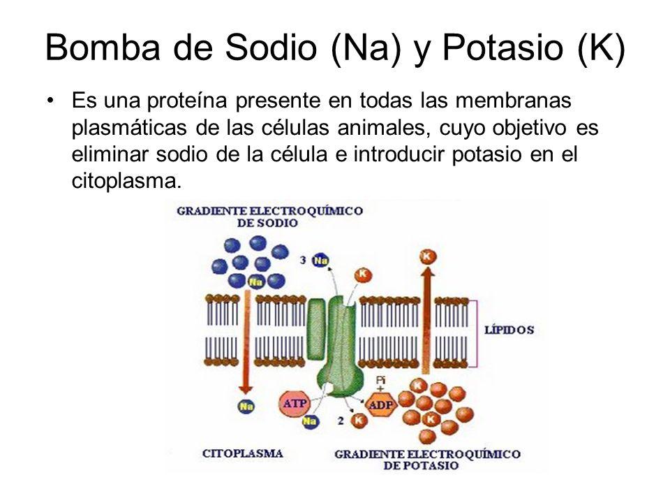 Bomba de Sodio (Na) y Potasio (K)