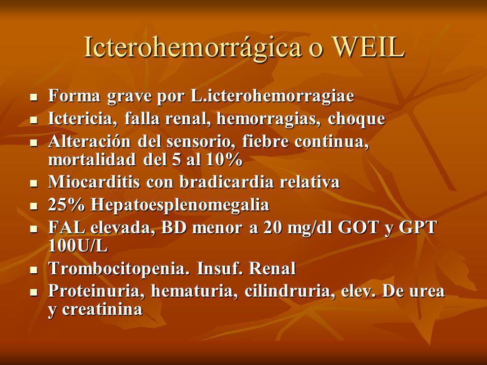 Icterohemorrágica o WEIL