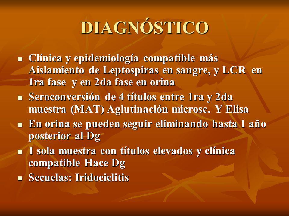 DIAGNÓSTICO Clínica y epidemiología compatible más Aislamiento de Leptospiras en sangre, y LCR en 1ra fase y en 2da fase en orina.